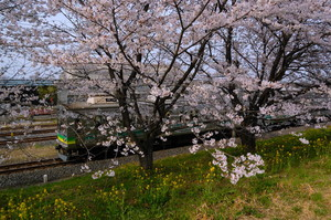 1304chichibu_003.jpg
